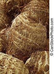 fresh taro root(colocasia) - background of fresh taro...