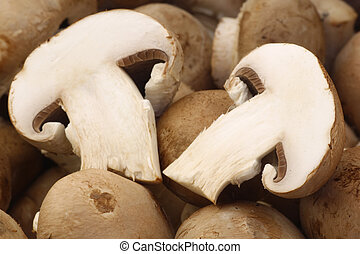 fresh champignon mushrooms - background of a bunch of fresh...