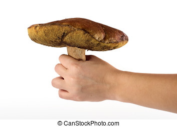 ceps in hand - hand holds a big ceps mushroom over white...