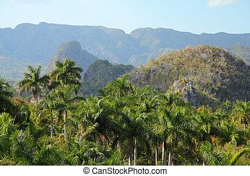 Cuba - Vinales National Park - Cuba - famous mogotes karstic...