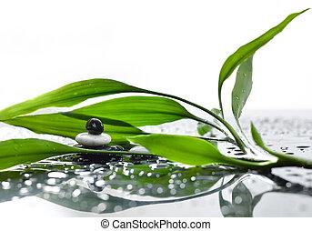eco, Hintergruende, Wasser, asiatisch, bambus, Tropfen