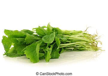 fresh turnip tops turnip greens on a white background