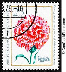 Postage stamp GDR 1975 Carnation, Dianthus Caryophyllus -...
