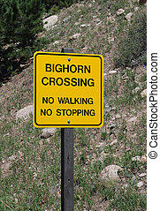 Warning sign: Big Horn Sheep Crossing - Yellow warning sign...