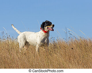 Hunting Dog in North Dakota