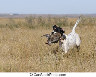 Dog With Grouse - Hunting Dog with Grouse