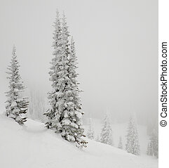 Fir tree covered with snow - Snow covered tree in the fog at...