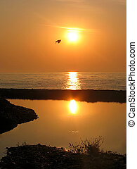 Sunrise at the sea. Flying bird - Flying bird against...
