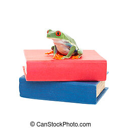 Frog on Science Books - A red-eyed tree frog sitting on a...