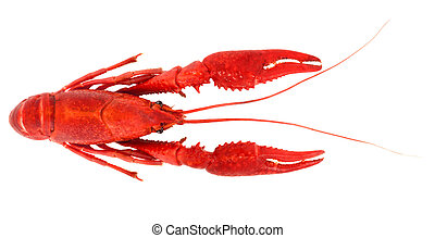 Crayfish, boiled and isolated on white background