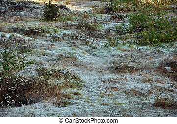 ice crystal frozen on the grass