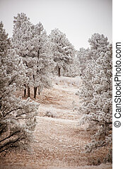Snowy Tree Landscape