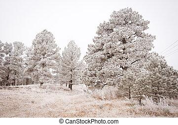 木, 風景, 雪が多い