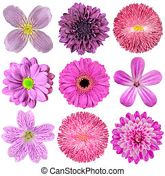 Collection of Various Pink, Purple, Red Flowers Isolated on...