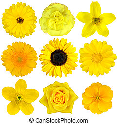 Collection of Yellow Flowers Isolated on White