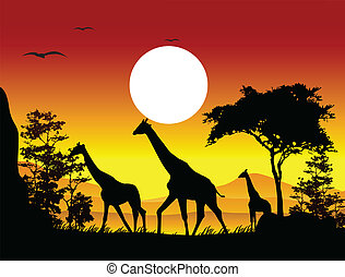 beleza, silueta, Girafa, família
