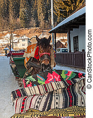 Portrait of a Traditional Romanian Sledge Horse