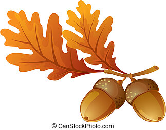 Acorns with leaves on a white background