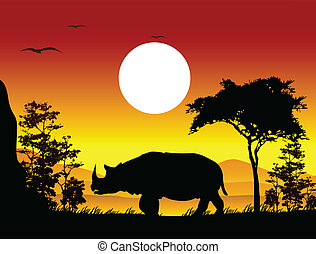 beauty silhouette of rhino