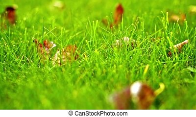 Grass and autumn leaves