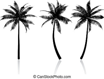 palm trees - Silhouettes of palm trees
