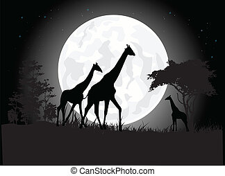 silhouette of giraffe family