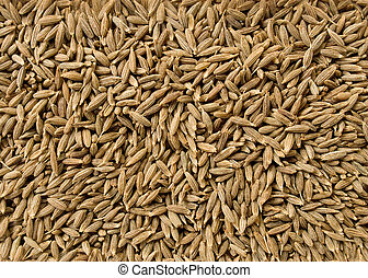 Cumin seeds for culinary use