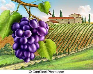 Vineyard - Black grapes with a nice rural landscape on...