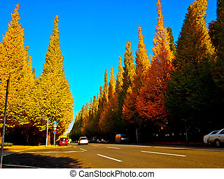 Road of Ginkgo