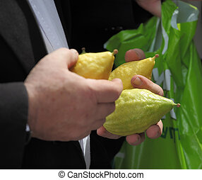 The male hands hold a ritual Citron fruit - Beautiful large...