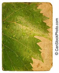 Green leaf vine. Old postcard. - Green leaf vine with...