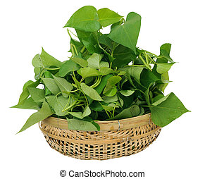 sweet potatos leave - many sweet potatos leaves in bamboo...