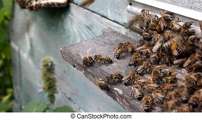 Bee hive in autumn