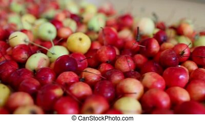 apples - pile ripe red apples of paradise apples, motion...