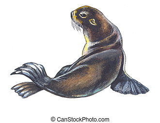 Fur seal. Hand drawing watercolor.