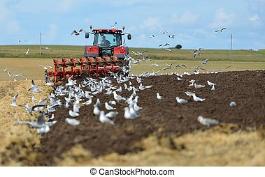 plowing - Tractor plowing surrounded by seagulls.