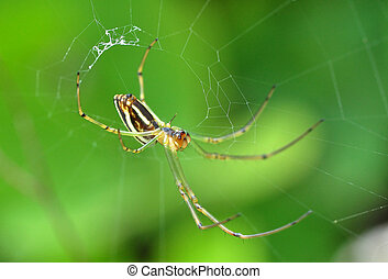A Yellow Orb Weaver