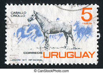 Criollo Horse - URUGUAY - CIRCA 1971: stamp printed by...