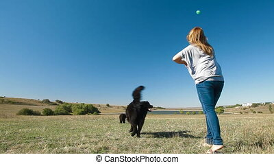 Newfoundland Dog Fetching Ball - Young woman training the...