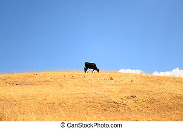 Cow on a high mountain
