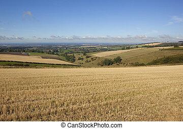 autumn fieldscape - a view over a patchwork autumn...