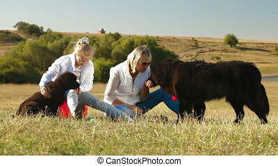 Newfoundland Dogs - Mother and Daughter Feeding their...
