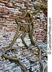 Tree roots Brick walls
