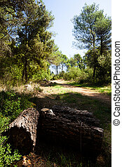 Chopped Tree Trunks at Mercadante Forest, Apulia, Italy