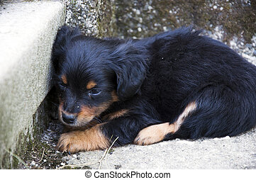 Abandoned Puppy - Frightened Abandoned Puppy Lying in the...