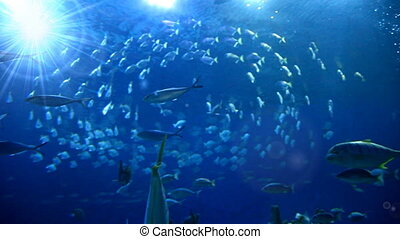 Blue ocean underwaters with fishes - Diving bottom view of...