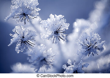 Detail of frozen flower - Close up of flower covered with...