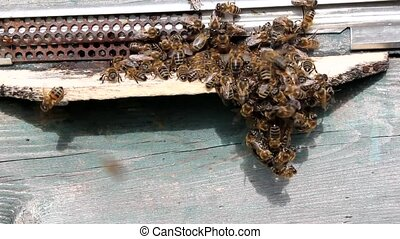 Bee hive in autumn - Ajar notches, quiet flight of bees - it...