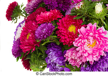 detail of mixed aster flowers   isolated on white background