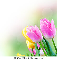 Tulips in the blurry background. Flower gift card